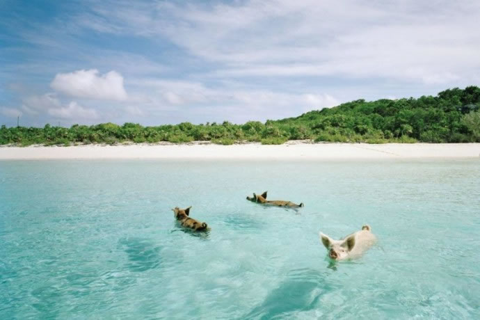 Beautiful Beaches You Would Love To Explore